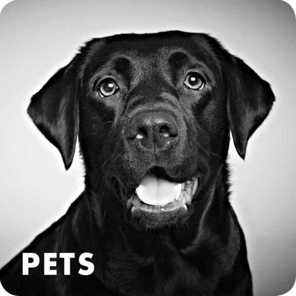 Sheffield Portrait Photographers - Pet Portraits